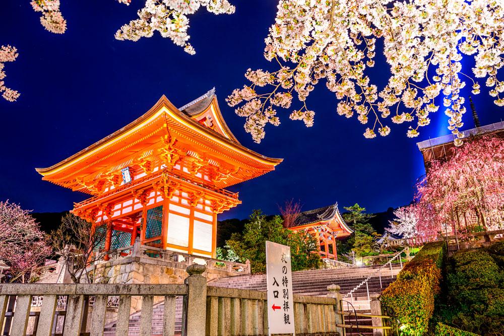 flores de cerejeira no Kiyomizu-dera Temple - Kyoto
