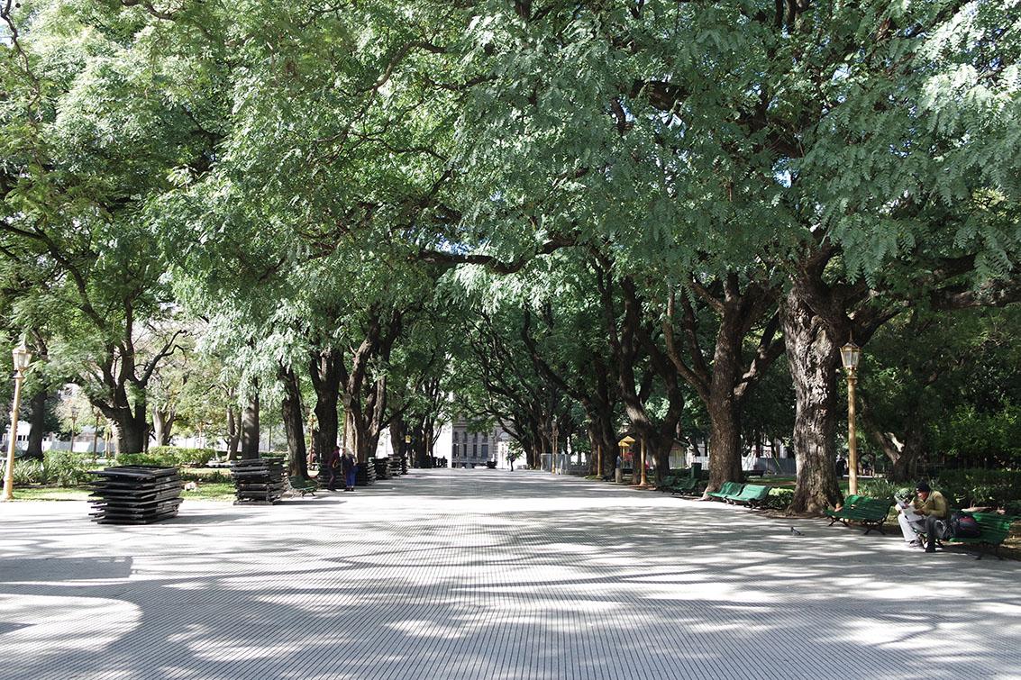Amei essas árvores