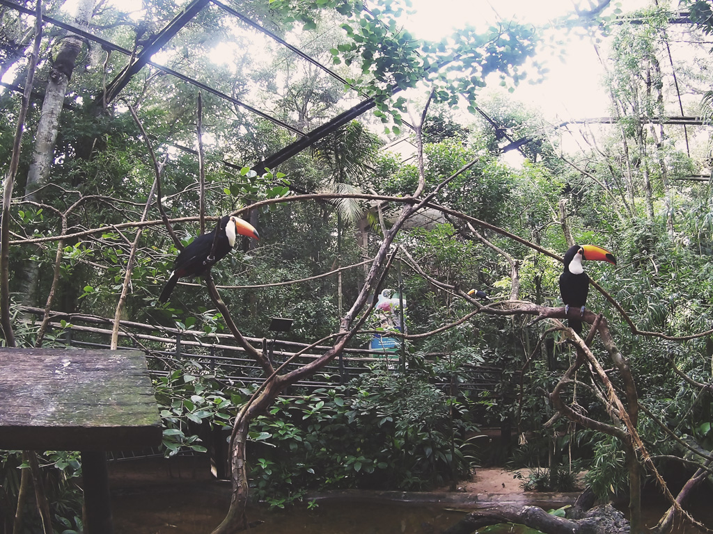 Viveiro-dos-tucanos