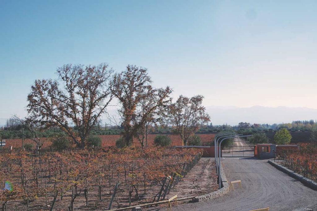 Vinícola em Mendoza no inverno