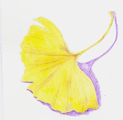 ginkgo-leaf-iphoto
