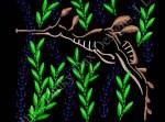 Weedy Sea Dragon Embroidery