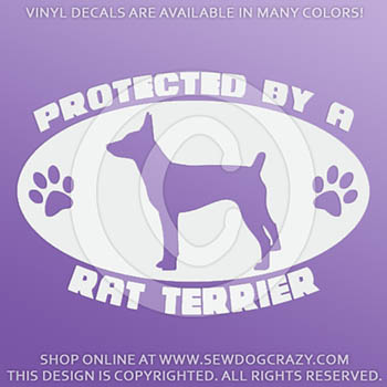 Protected by a Rat Terrier Car Sticker