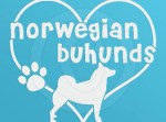 I Love Norwegian Buhunds Decals