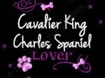 Rhinestones Cavalier King Charles Spaniel Embroidery