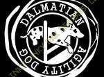 Dalmatian Agility Wear