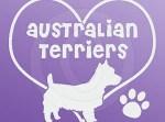 I Love Australian Terriers Decals