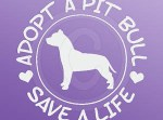 Adopt a Pit Bull Car Window Sticker