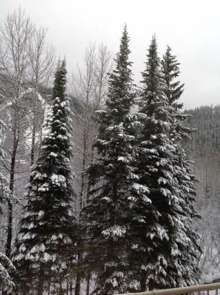 Snow, snow, snow ...