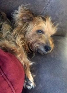Rosie snuggled
