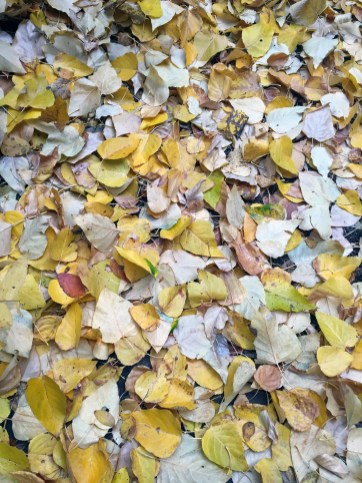 Leaves on ground