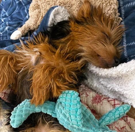 Sleeping Zoey