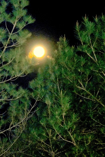 Moon-in-the-Branches-0380_Compressor-comp