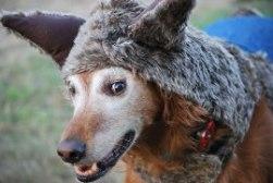 big-bad-wolf-bigdog