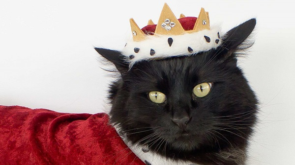 Tutorial: A royal crown and robe for your pet