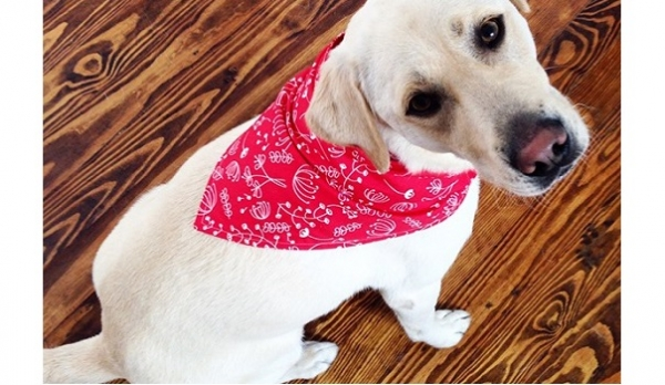 Free pattern: Dog Bandana in three sizes