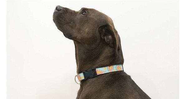 Tutorial: DIY custom dog collar