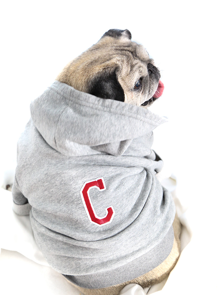 Sewing tutorial: Make a hoodie for your dog