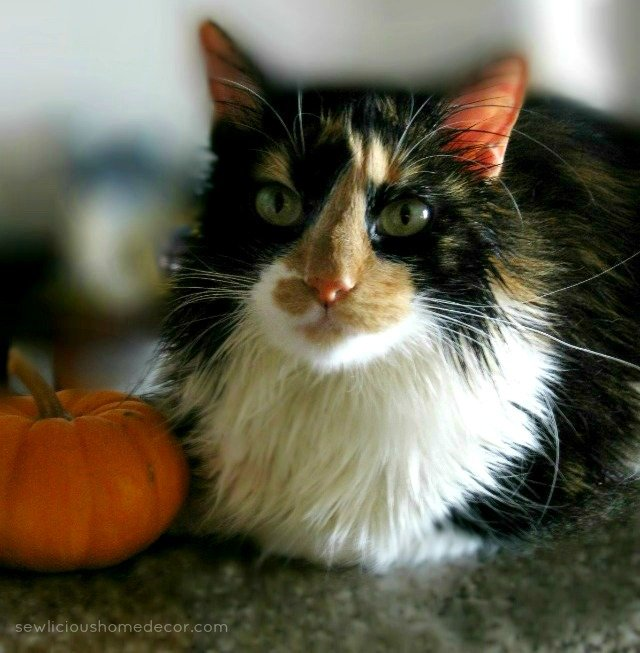 fall pumpkin kitty