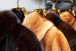 Rich female fur coats on sale in shop