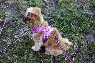 Kimono Dog Harness from Sew Mama Sew, Pet Pattern tutorials