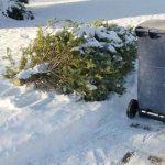 Christmas Tree Upcycling