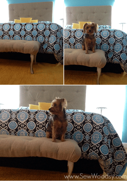 upholstered-tufted-headboard-with-yorkie