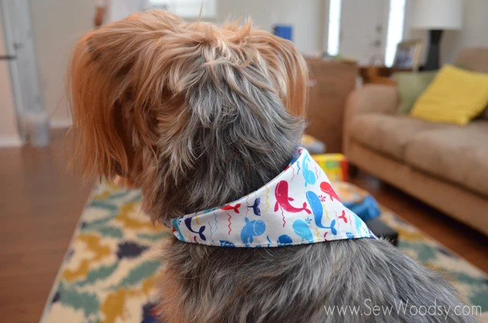 Whale bandana made for the dog!