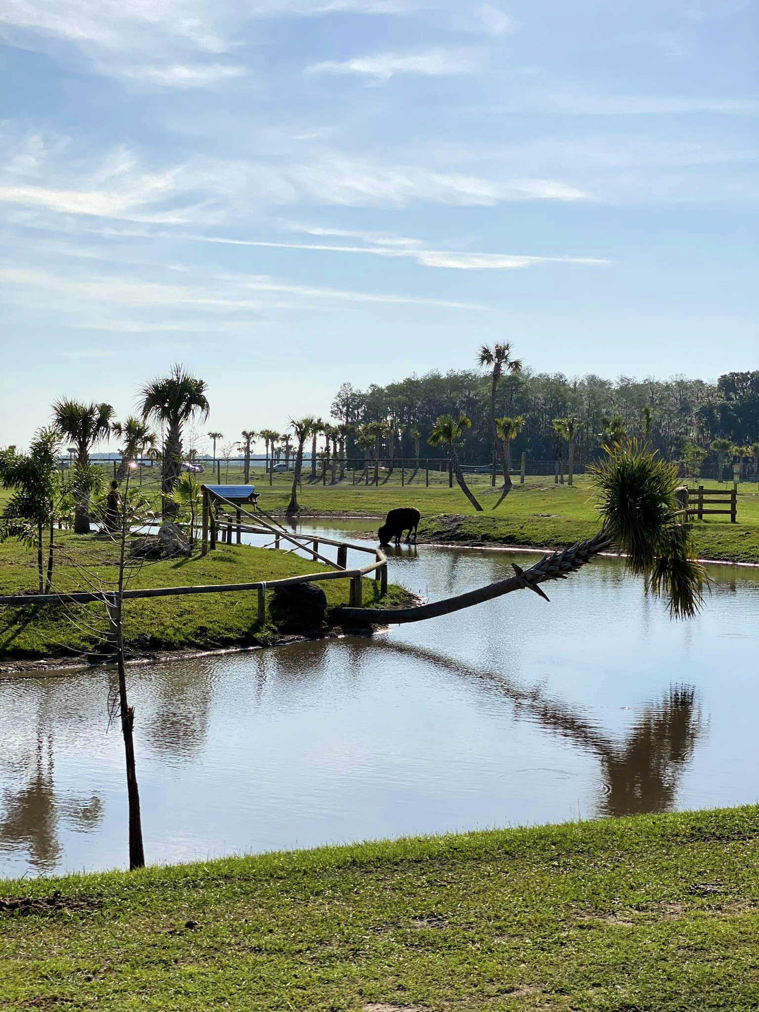 Landscape of Wild Florida Drive-Thru Safari Park