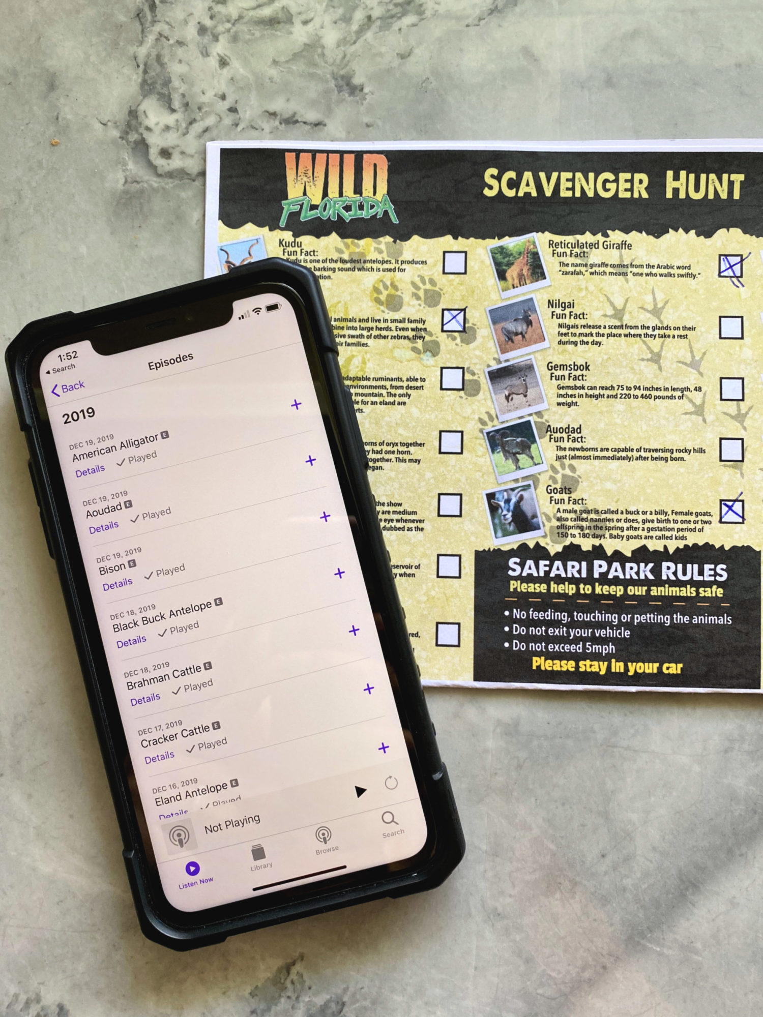 Downlaod the Podcast and Scavenger Hunt from Wild Florida Drive-Thru Safari Park