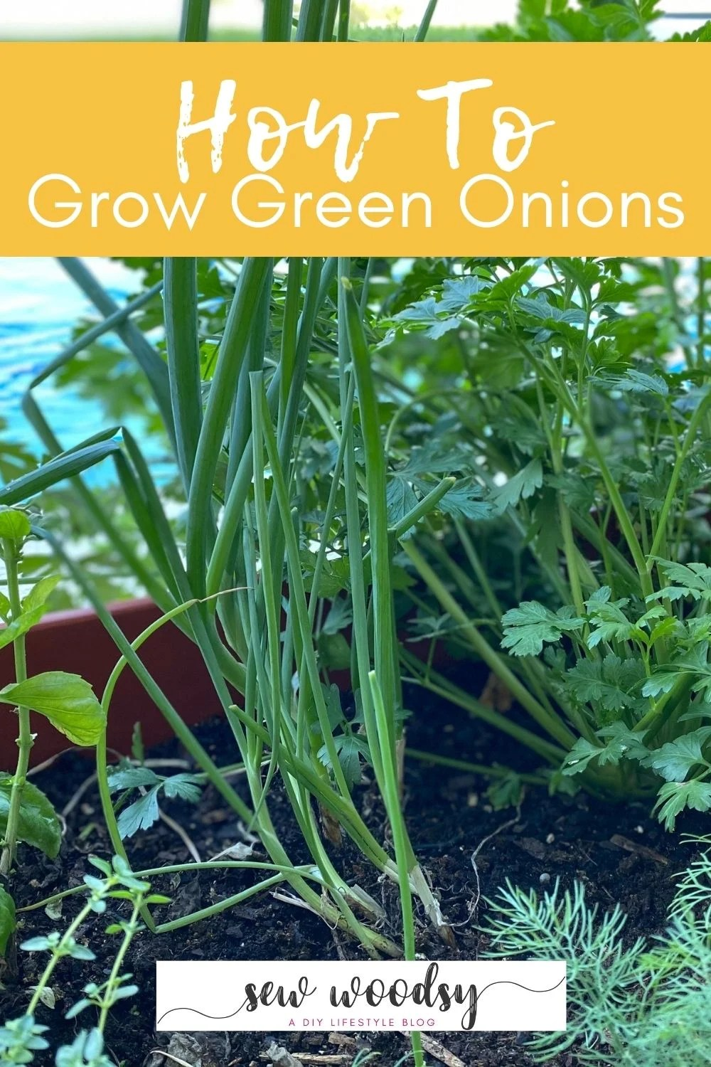 Green onions planted in a garden with text on image for Pinterest.
