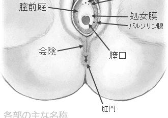 肛門と会陰
