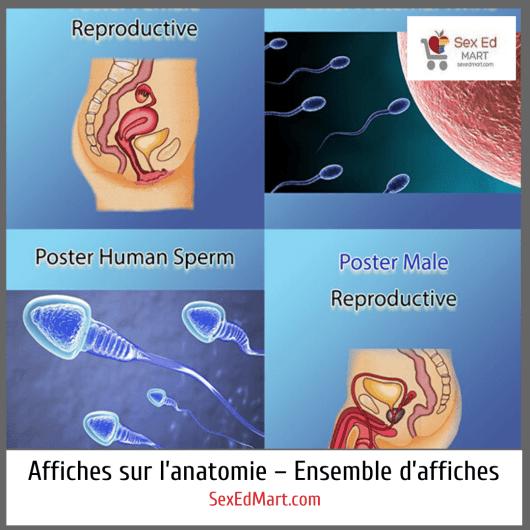 Affiches sur l'anatomie – Ensemble d'affiches