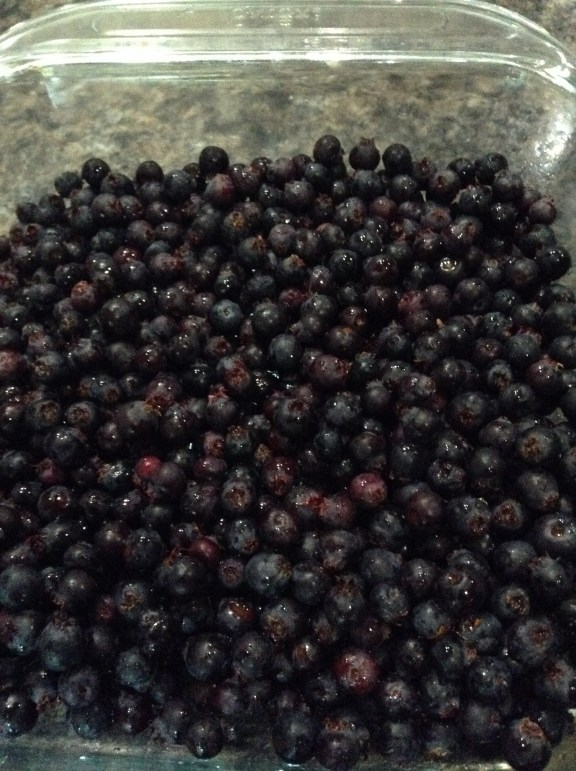 Just out back of our home we have bushes and bushes of these delicious berries called Saskatoons. LOVE!!