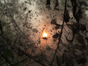 I took this picture through the nest of the tent caterpillar. With the smokey sky I thought it looked pretty coo.