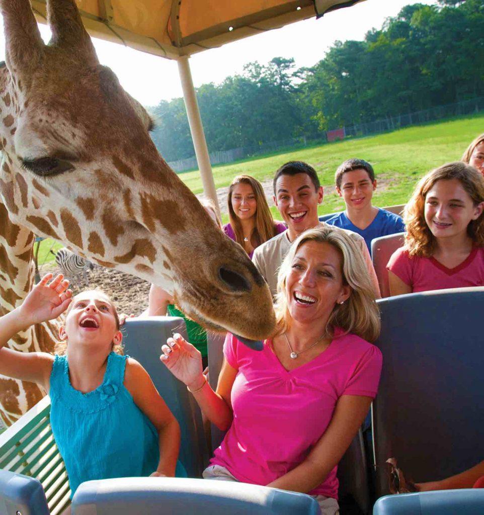 Safari Off Road Adventure Six Flags Great Adventure
