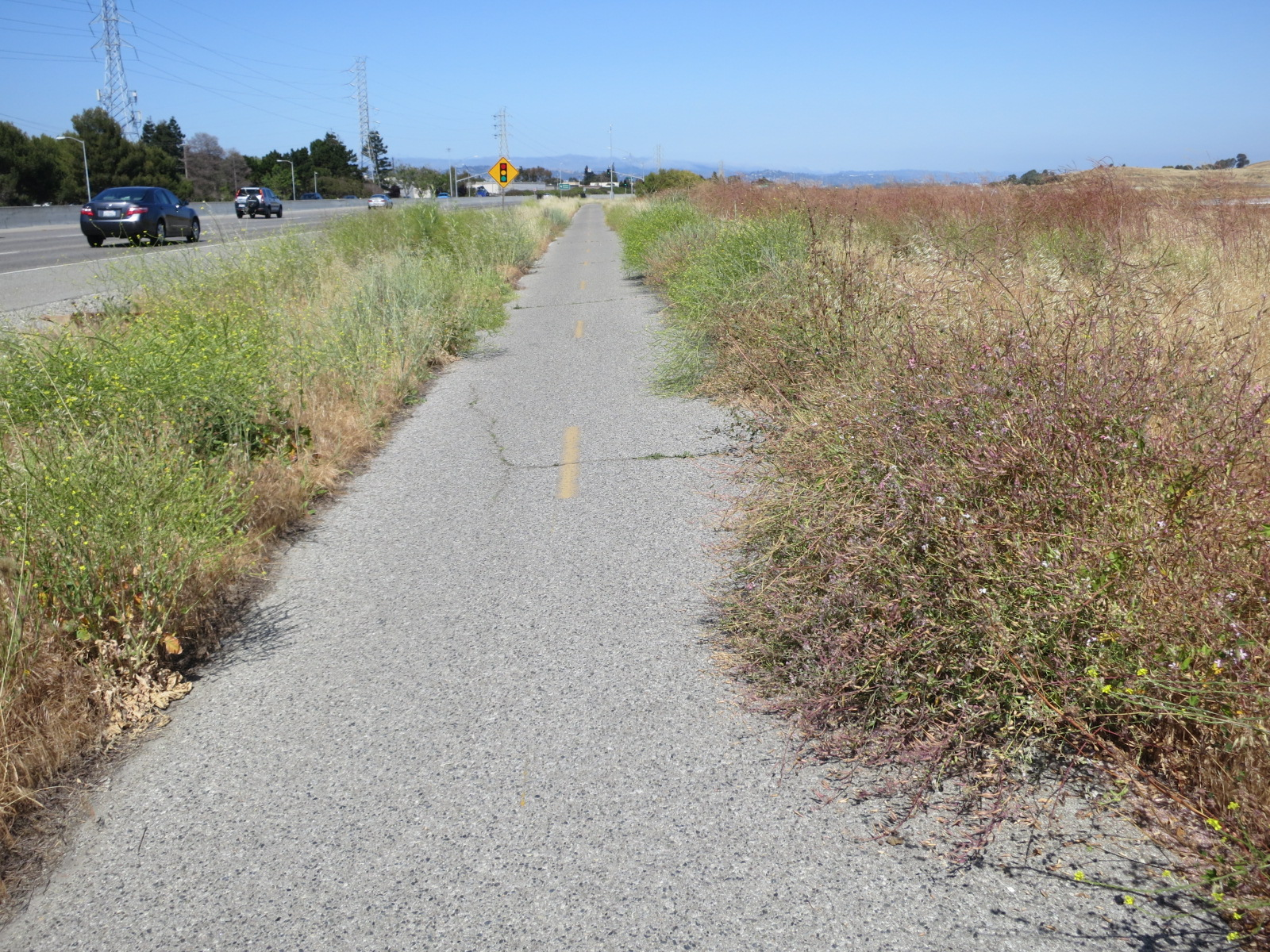 Weeds overgrowing the Bay Trail in Menlo Park