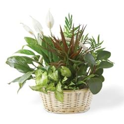 Classic dish garden from send flowers usa