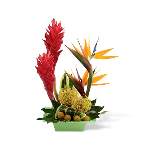 Tropical Ginger Arrangement At Send Flowers