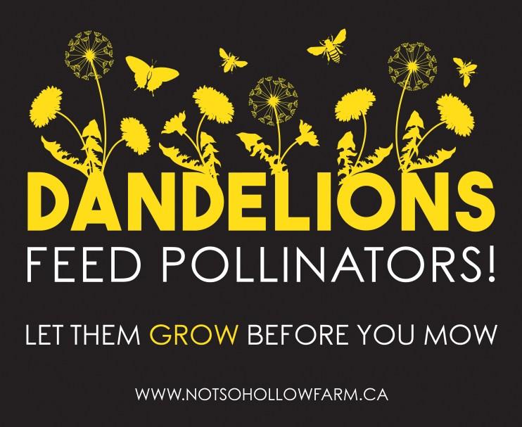 Dandelions Feed Pollinators!