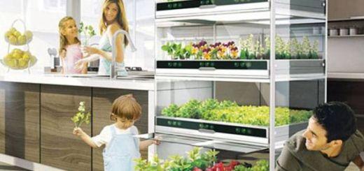 nano-gradina-o-noua-solutie-pentru-gradina-de-legume-din-bucatarie