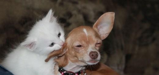 8-sfaturi-surprinzatoare-pentru-iubitorii-de-caini-si-pisici