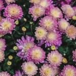 flowers-1031669_640