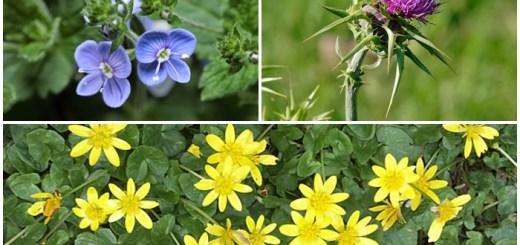 10-plante-medicinale-utile-in-afectiunile-splinei