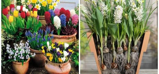 Cele mai frumoase idei de plantare a bulbilor de primavara