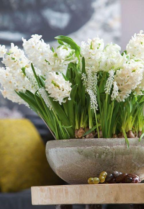 decorarea casei cu flori - zambile
