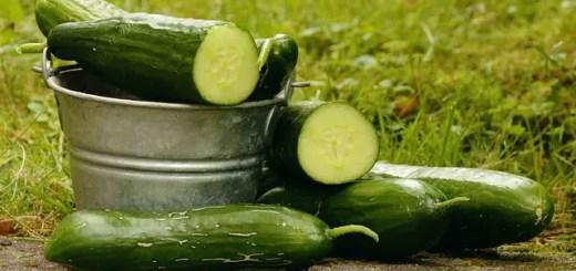 Castravetii. Top 10 cele mai importante beneficii ale legumelor racoritoare