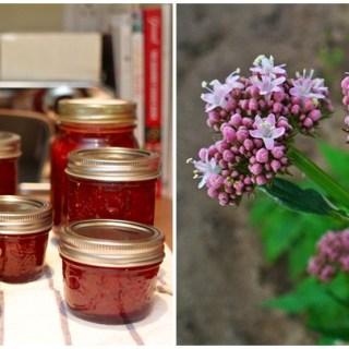 Gem de valeriana cu miere. Remediul naturist care te calmeaza
