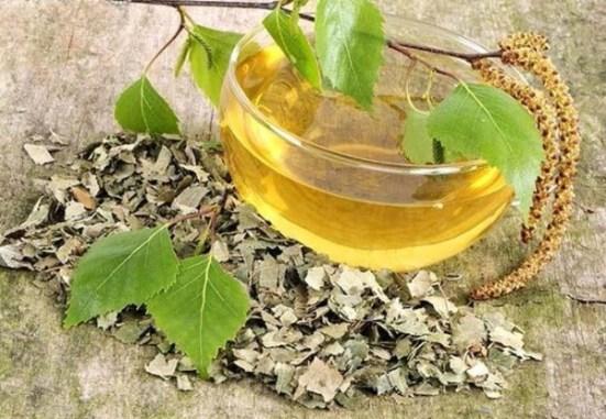 ceai-de-mesteacan-pentru-reumatism