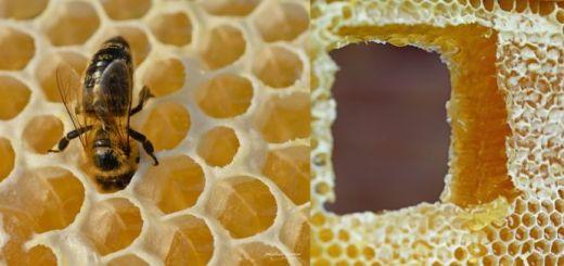 Ceara de albine. Ce actiuni si indicatii terapeutice are aceasta minune din stup